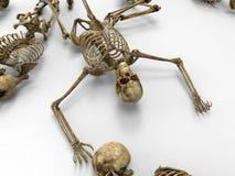 mänskliga skelett stock illustrationer