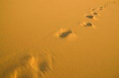 mänskliga strandfotspår arkivfoton