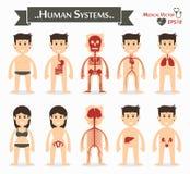 Mänskliga system vektor illustrationer