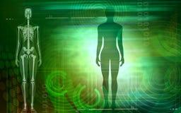 mänskligt vektor illustrationer