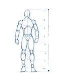Mänskligt diagram D Royaltyfria Foton