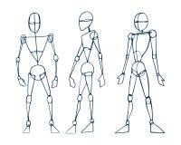 Mänskligt diagram män b Royaltyfria Foton