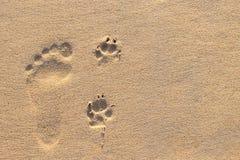 Mänskligt fotspår bredvid hundfotspår på den tropiska stranden royaltyfri bild