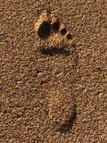 Mänskligt fotspår i sand på stranden royaltyfria bilder