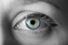 mänskligt makroskytte för blått öga Royaltyfri Fotografi