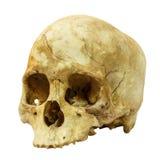Mänskligt skallebrott (den mongoloida, sidan) (, asiat) på isolerad bakgrund Arkivbild