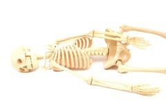 mänskligt skelett Arkivbilder