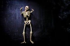 mänskligt skelett Arkivfoton