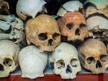mänskligt skelett Fotografering för Bildbyråer