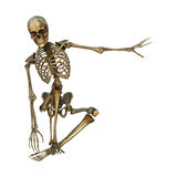 mänskligt skelett för tolkning 3D på vit Arkivfoton