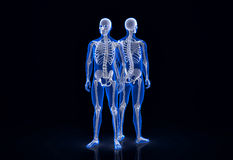 mänskligt skelett Framdel- och baksidasikt Innehåller den snabba banan Royaltyfri Fotografi