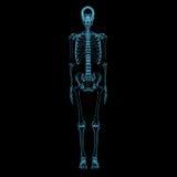 Mänskligt skelett (genomskinliga blått för röntgenstrålen 3D) Royaltyfri Fotografi