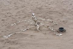 Mänskligt skelett som byggs från djura ben på den skelett- kusten i Namibia Arkivbild