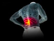 Mänskligt skelett under röntgenstrålarna som isoleras på svart bakgrund Royaltyfria Foton