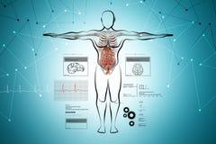 mänskligt system för huvuddeldigestivkex royaltyfri illustrationer