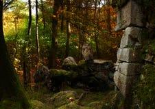 Märchen-Waldstimmung Lizenzfreies Stockfoto