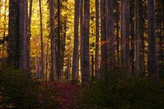 Märchenherbstwald Stockbilder