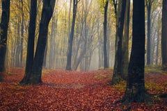 Märchennebel im Wald mit Schattenbildbäumen Stockfotos