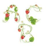 Märka en jordgubbestilsort Rött bärbokstäveralfabet Fruktabc Royaltyfri Bild