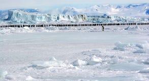 März der Kaiser-Pinguine Lizenzfreie Stockfotos