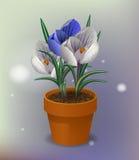 8. März Frauen ` s Tag Vektorillustrationstopf mit f Grußkarte mit Blumenkrokussen und einem Band, das Glückwünschen sagt lizenzfreie stockfotos