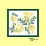 März Grußkarte Internationaler Frauen ` s Tag Die gezeichnete Hand blüht Mimose Stockbild