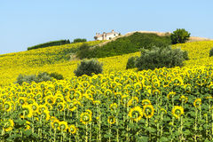 Märze (Italien): Sommerlandschaft Stockbild