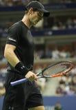 Mästare Andy Murray för storslagen Slam av Storbritannien i handling under match för runda fyra för US Open 2016 Royaltyfri Bild