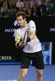 Mästaren Andy Murray för den storslagna slamen av Förenade kungariket i handling under hans australiskt öppnar semifinalen 2016 Royaltyfria Bilder