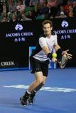 Mästaren Andy Murray för den storslagna slamen av Förenade kungariket i handling under hans australiskt öppnar semifinalen 2016 Arkivbilder