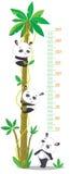 Mäta väggen med palmträdet och tre roliga pandor Arkivfoton
