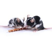 Mäuse Lizenzfreies Stockfoto