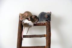 Mäuse auf Spielzeugtreppenhaus Lizenzfreies Stockbild