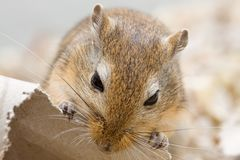 Mäusebissen Lizenzfreies Stockfoto