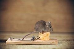 Mäusefalle Lizenzfreies Stockfoto