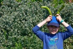 Młoda chłopiec utrzymuje dwa szerokich fasoli strąka nad jego przewodzi udawać być królikiem Dzieci uprawiać ogródek wielkanoc kr obraz royalty free