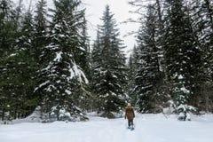 Młoda kobieta snowshoeing przez lasów Fernie prowincjonału Halny park, kolumbia brytyjska, Kanada fotografia royalty free