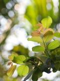 Młoda malutka zielona roślina opuszcza płytką głębię pole pod naturalnym światłem słonecznym fotografia royalty free