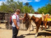 Młody człowiek dotyka konia zdjęcia stock