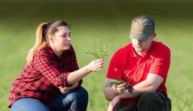 Młodzi rolnicy examing uprawianych pszenicznych pola fotografia royalty free