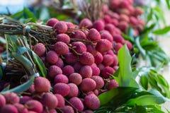 Mål för frukt för smak för litchiplommonfrukt rött sött ätit gemensamt Royaltyfri Foto