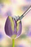 Måla en tulpan Royaltyfri Bild