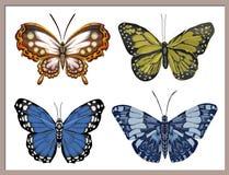 Måla med fjärilar på en vit bakgrund Royaltyfria Bilder