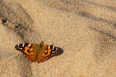 Målad damfjäril på sanden Arkivfoto