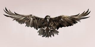 Målad fågel som är korpsvart på framdelen Färg skissar fågeln stock illustrationer