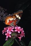 målad fjärilslady fotografering för bildbyråer