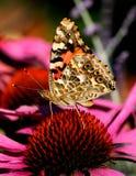 målad fjärilslady Royaltyfria Bilder