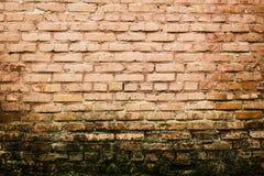 Målad gammal byggande vägg för röd tegelsten med mossabakgrund arkivbilder