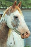målad häst arkivbilder