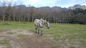 målad häst Arkivfoto